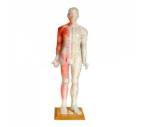 Модель для акупунктуры - Человек (84см)
